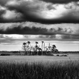 Palm Trees in the Marsh
